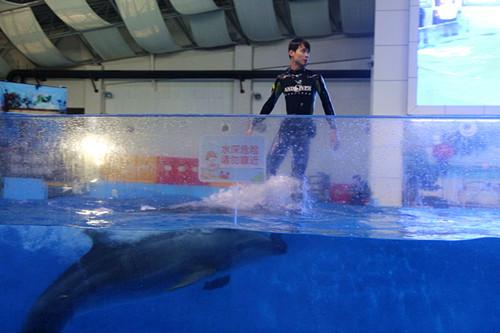 """合肥海洋世界全新海洋精灵魅力表演--海豚""""双骑士"""",海豚拉船五一倾情"""