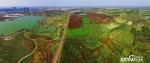 【美丽中国长江行】看江淮分水岭上的生态林海:绿了江岸富了百姓 - 徽广播