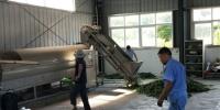 """小产业中打造""""石台模式""""图之石泉村茶厂茶叶加工内景 - 安徽新闻网"""