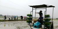 广德县召开水稻机插同步精准施药配套技术现场会 - 农业机械化信息