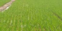 宣城市开展农机技术跟踪服务指导 - 农业机械化信息