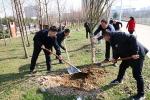 校领导带头参加义务植树活动 - 安徽科技学院