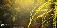 【图片专题】夜月一帘幽梦 春风十里柔情 - 安徽科技学院